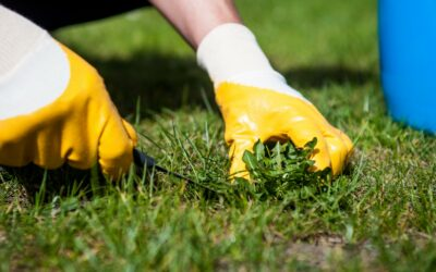 Get Rid of Weeds in an Eco-friendly Way