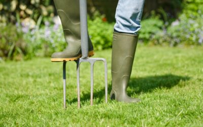 Basics of Aerating Your Lawn