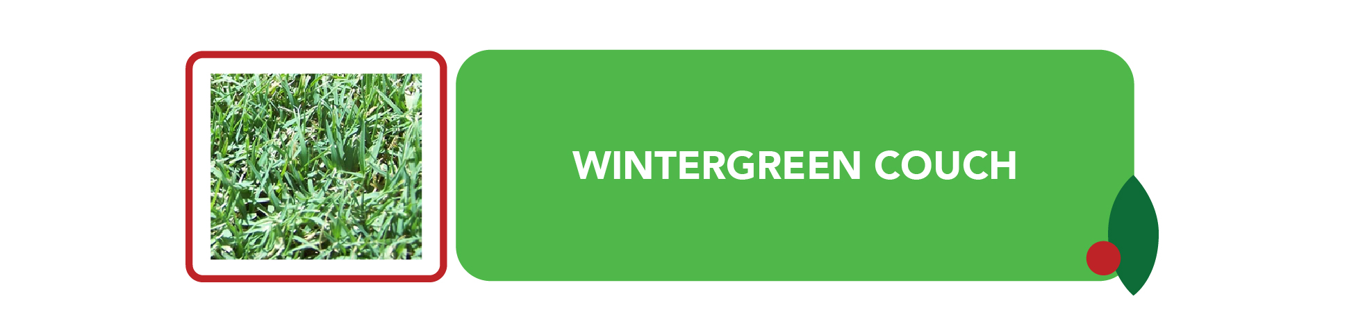Wintergreen Turf