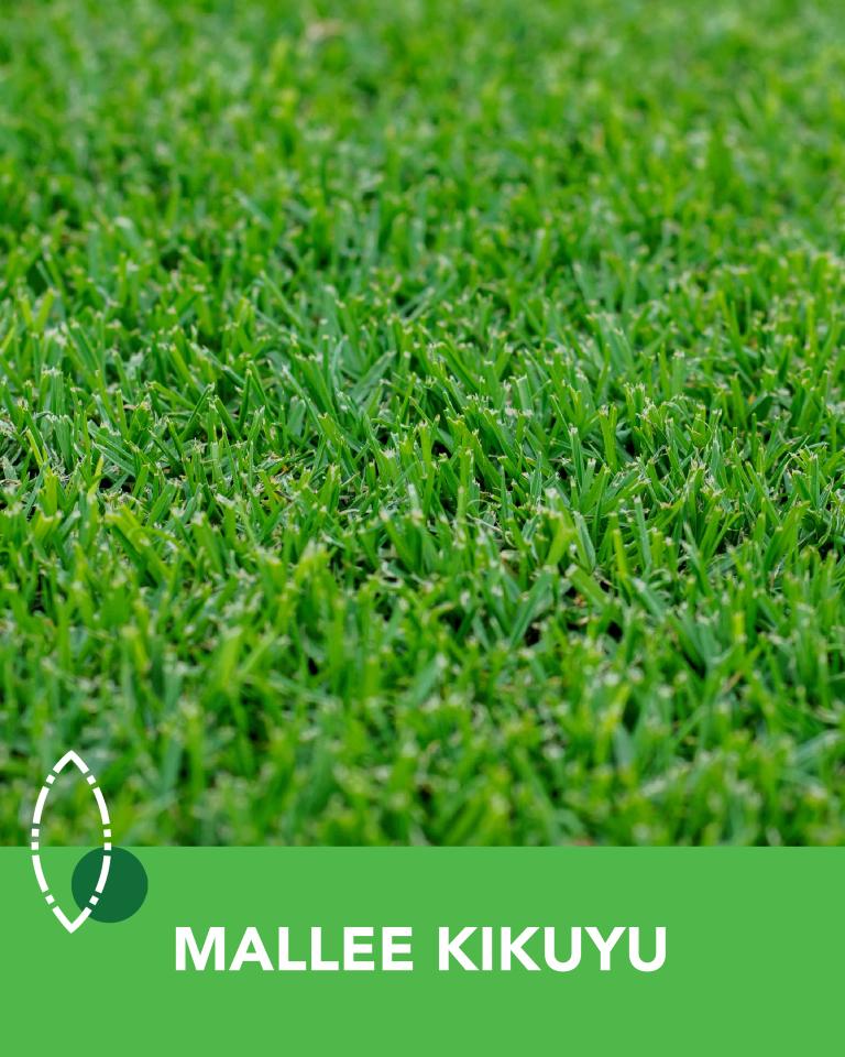 Mallee Kikuyu Turf