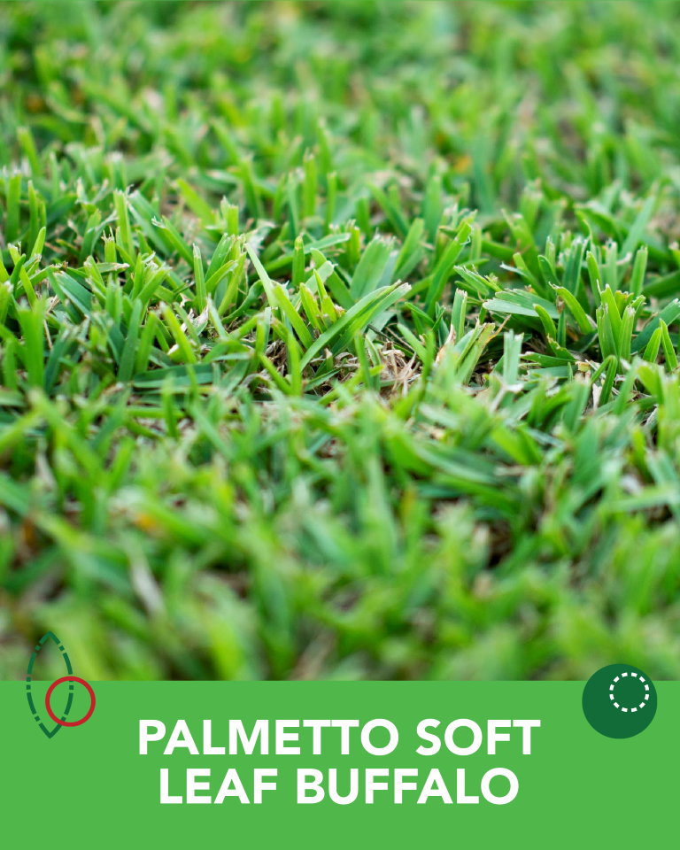 Palmetto Soft Leaf Buffalo Turf