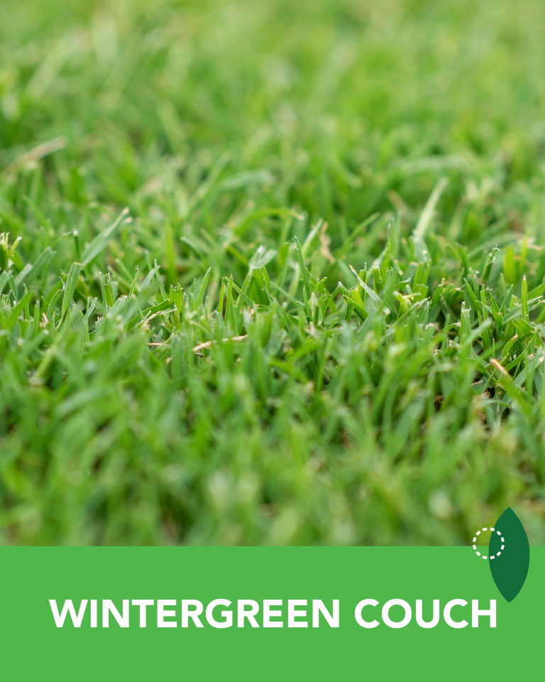 Wintergreen Couch Turf